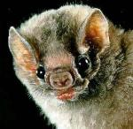 The Butler is defeated by a strange ethereal force from the sky. You look up and see a tiny but vengeful looking vampire bat. It transforms back into