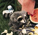 Do you often feel like a wild gang of underwear wearing raccoons are spying on you?