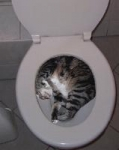 Can you train a cat to go to the toilet?