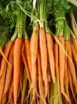 Carrots that are planted do not not not like being planted.