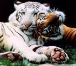 Your favorite animal is your favorite because it is the biggest of its typeexample: the tiger is the biggest of all cats or: the Great Dane is the big
