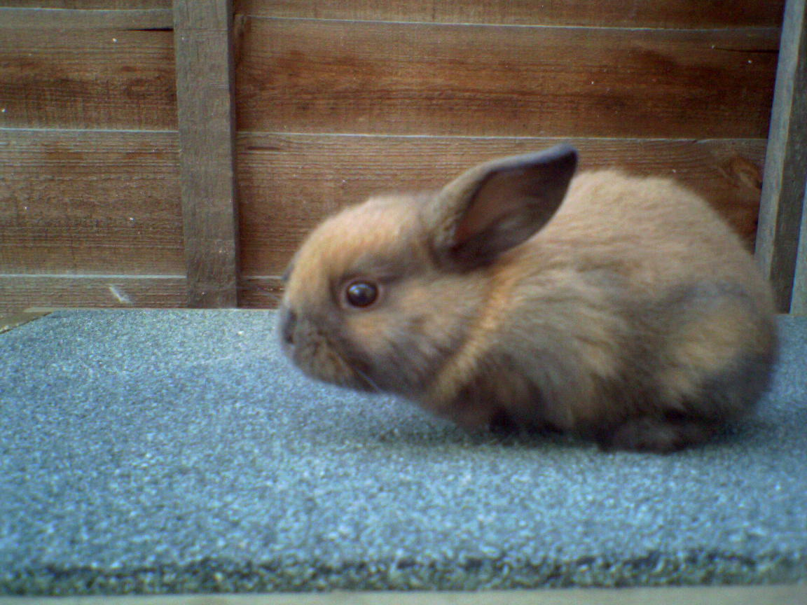 How Much Do You Know About Rabbits