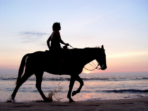 what horse breed is best for you riding horses 480x360