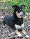 Where does the Pandorain Dog Originate from?