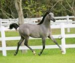When you walk in the horses pasture would your dream horse do?