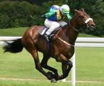 What breed of horse would you use for racing?
