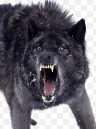 What Are My Wolf Name & Personality?
