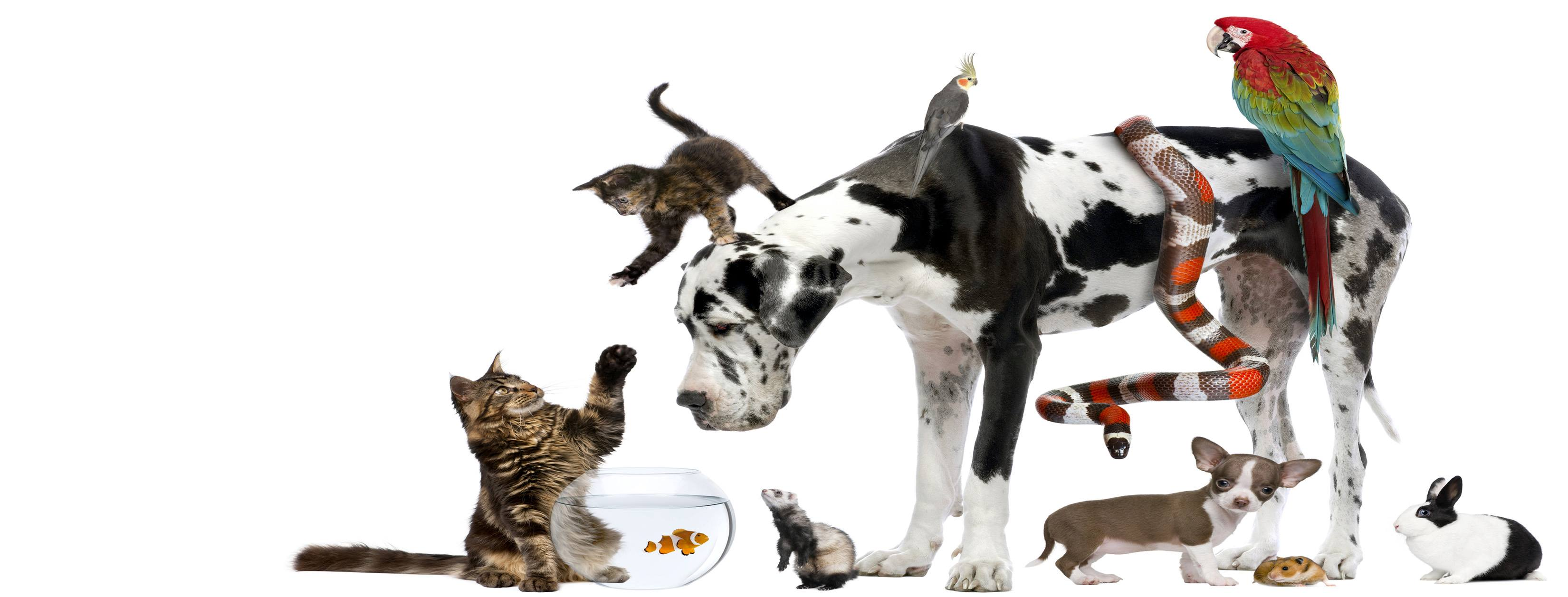 what s your perfect pet
