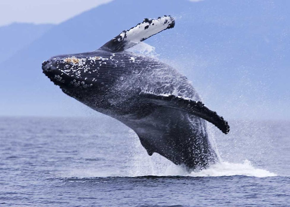 dolphin and whale facts