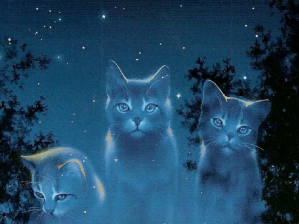 cat shelter milwaukee
