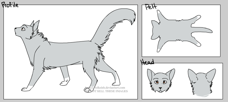 What is your warrior cats role?