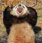 Do you think there is a panda about to throw a blanket over your head?
