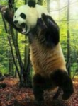 Do some of the people you know suspiciously look like dressed-up pandas?