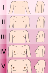 Do you have any signs of puberty (e.g. breast development, body hair, mood swings etc)?