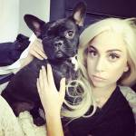 What is one of Lady Gaga's three puppies named?