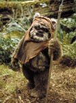 Who played Wicket the Ewok?