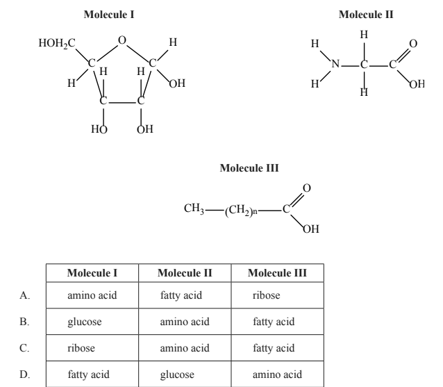 which types of molecule are shown in the diagram? (see graph for choices