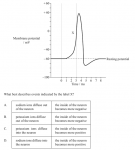 The diagram shows the changes in membrane potential during an action potential. (See graph to select possible answers.)