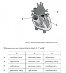 The diagram below shows the human heart. (See graph to select possible answers.)