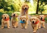 They love long walks.