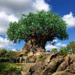 Which one of these things can't you do at Walt Disney World?