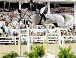 There is I big jump and your rider is not ready. What do you do?