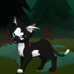 What is your Warrior Cat like?