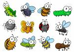 Which bug/insect has 12 eyes?