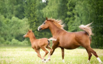 Let's start of easy! What is a baby horse called?