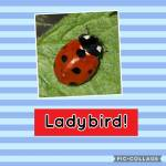 Ladybirds!