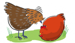 How does your chicken get along with other chickens/poultry?