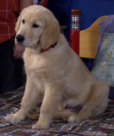 What is the name of the family dog?