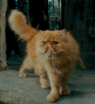 What is the name of the half-kneazle cat Hermione buys in the Prisoner of Azkaban